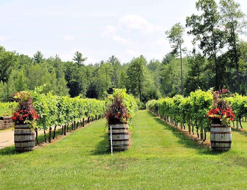 zorvino's vineyard